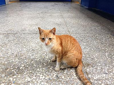 侯硐猫村という名らしく駅にも猫